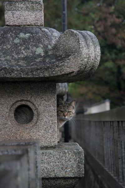 今日も雨。 キジトラ子ネコ
