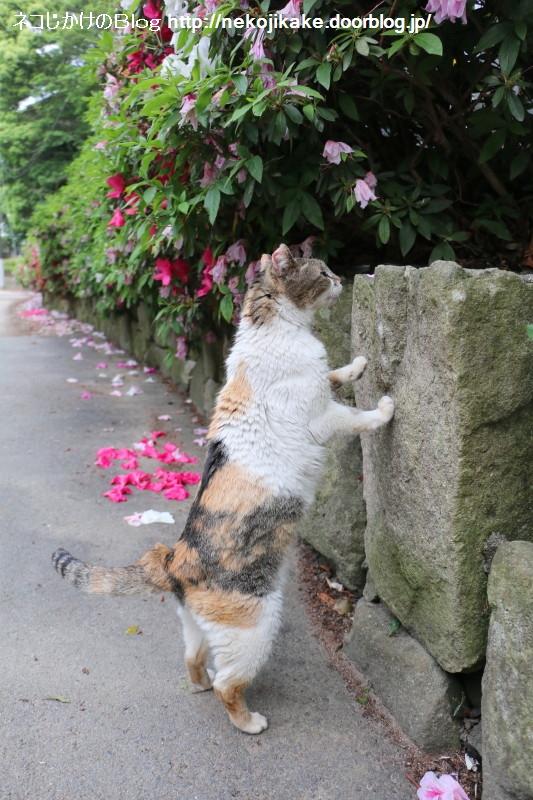 2015050706待ち猫。6