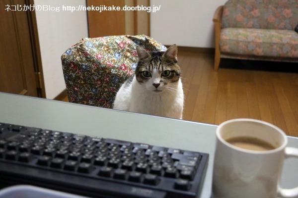 2016121004猫はなぜ椅子に座るのか。2