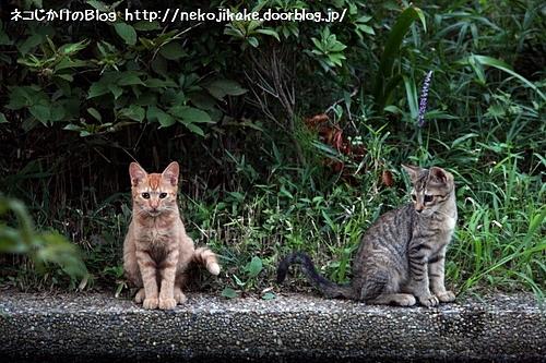 子ネコ2匹。