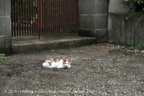 お母さんは? ミケ子ネコ