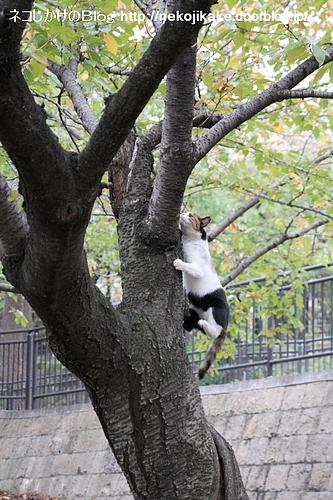 木の上で鳥の鳴き声すれば、すぐに駆けつける。