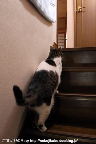 2016040413階段上る。2