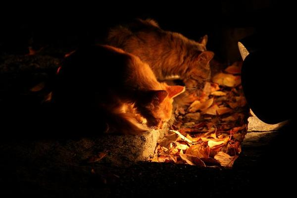 日曜日のネコたちへ。母子ネコ