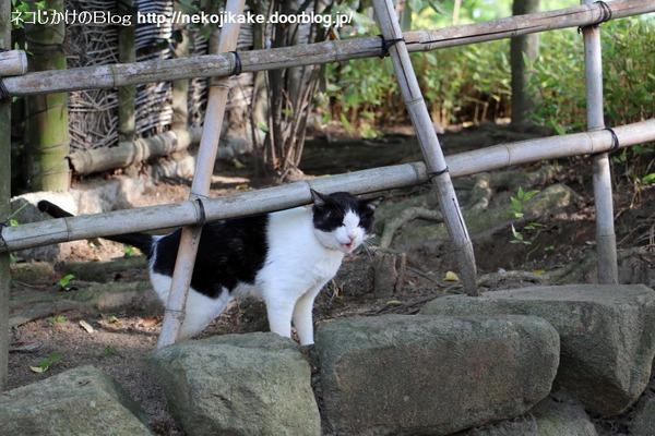2016051308白黒ネコ三段活用。3