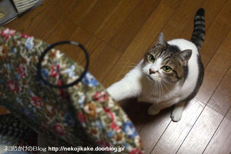 2017030601猫を惹きつける魅力とは。