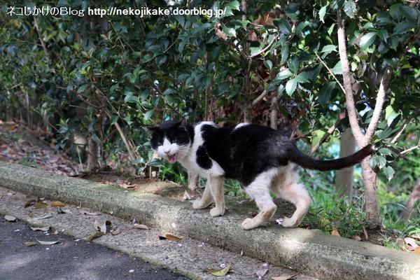 2016041404鳴く猫。1