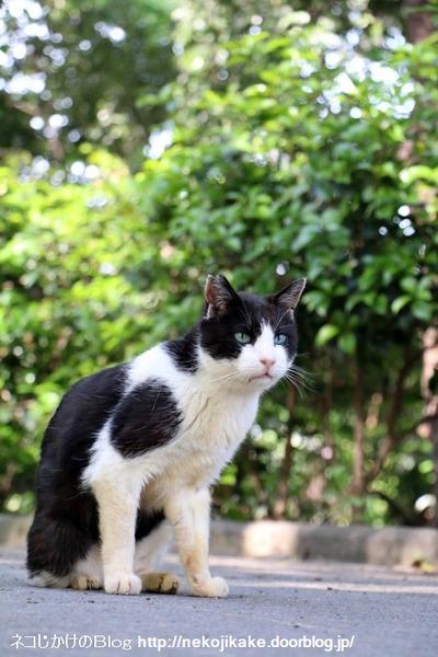 2016051306白黒ネコ三段活用。1