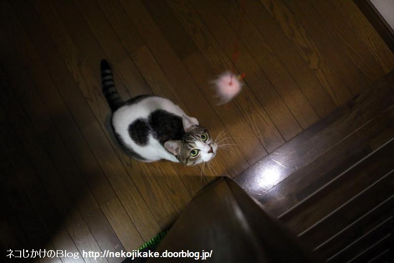 2016101604階段で猫が遊んでんねん。