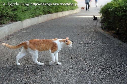 猫の横断。