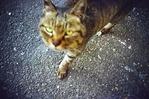 猫の手も借りたい3DM