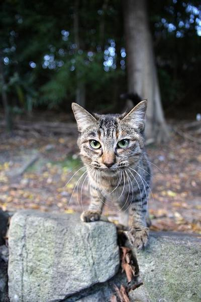 ネコたちを見つめて。その1 まこ
