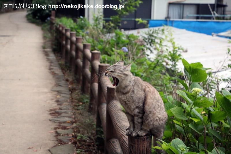 2015060206くつろぎの猫。5
