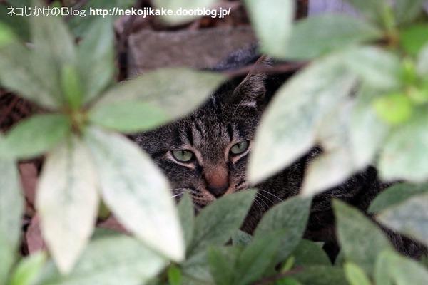 2016061406猫の見つめる先。4