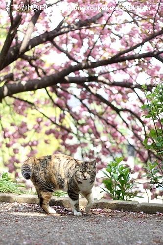 まだ八重桜があった。