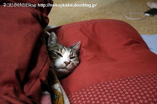 寝起きの顔。