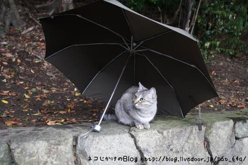 相合傘。 みこ