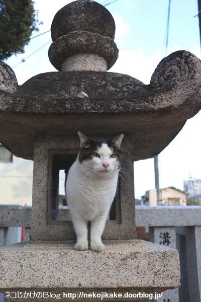 2016011606神社の猫たち。2
