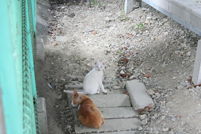さわやか。白い子ネコ。