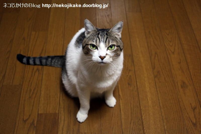 2018041301猫との会話を楽しむ。1