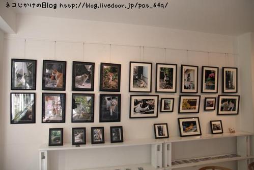 猫写真展を巡る。その3 写真展示2(みけさま)