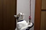 ネコもエコ。シマ2