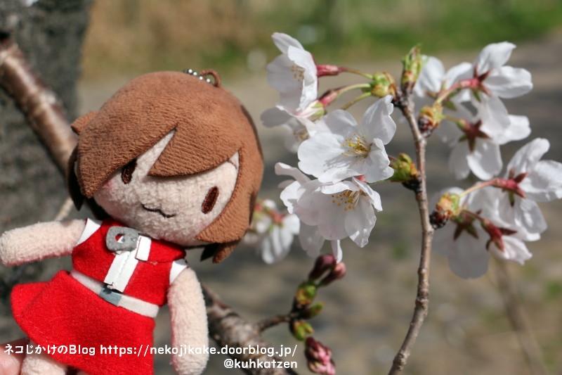 2021032704桜咲く。1