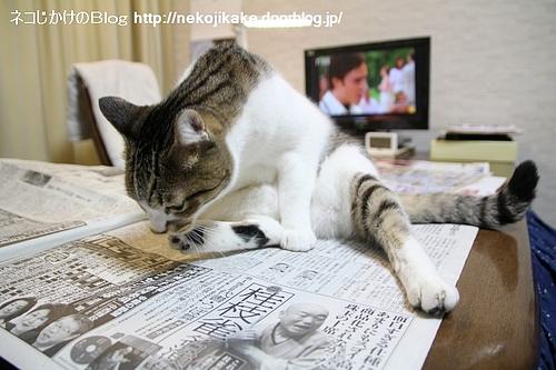 新聞もテレビも見ようぜ。