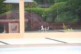 池のそばのネコたち。その5
