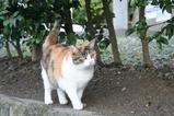 三毛ネコ。