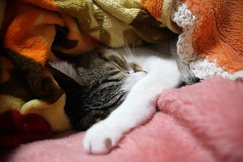 毛布の餌食。