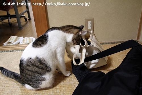 荷物検査。