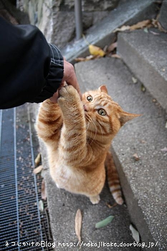 Nice to meet you!