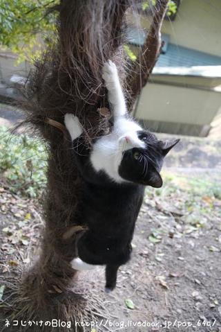 木登り。その2 オーバ