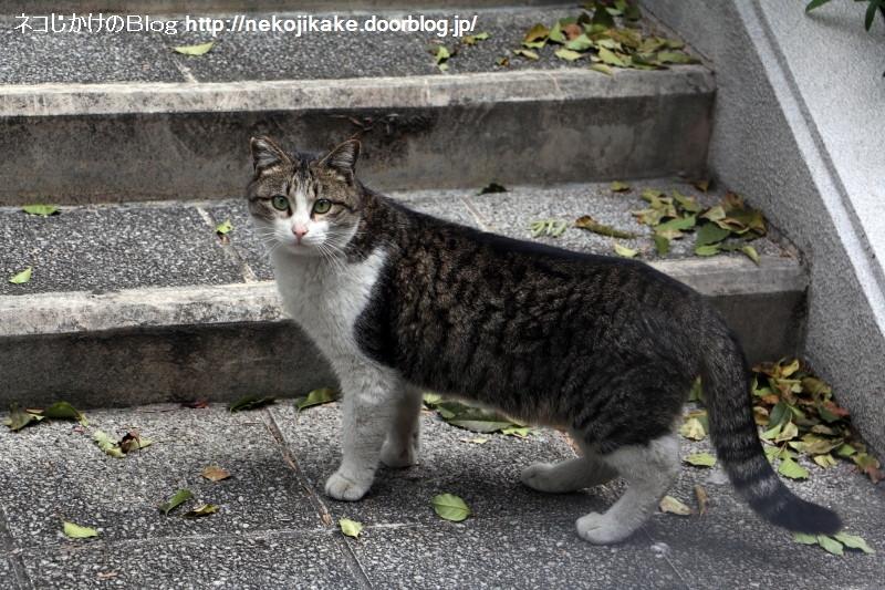 2017040604猫がこっち見てる。2