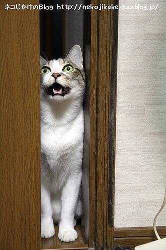 開けろ〜。