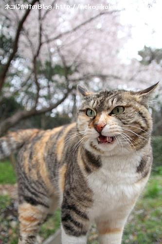 桜と私、どちらがキレイ?