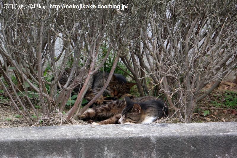 2016100206寝る猫は育つ。
