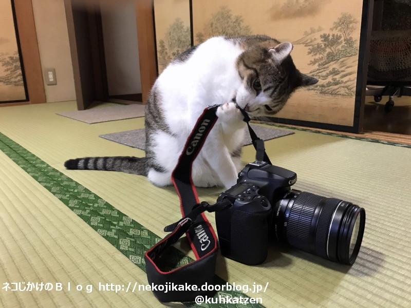 2020080102カメラに夢中??