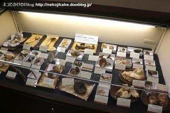 2018102107きのこ!キノコ!木の子!@大阪市立自然史博物館。3
