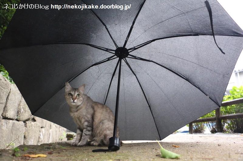 2015063006雨が降る。1