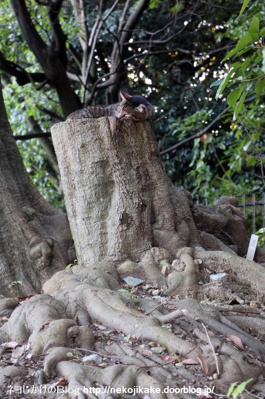 2015092802寄らば大樹。1
