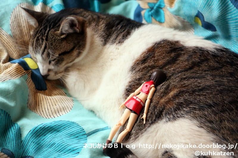 2020060401猫を吸う。