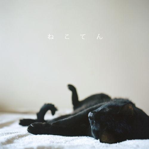 猫写真展「ねこてん」DM1