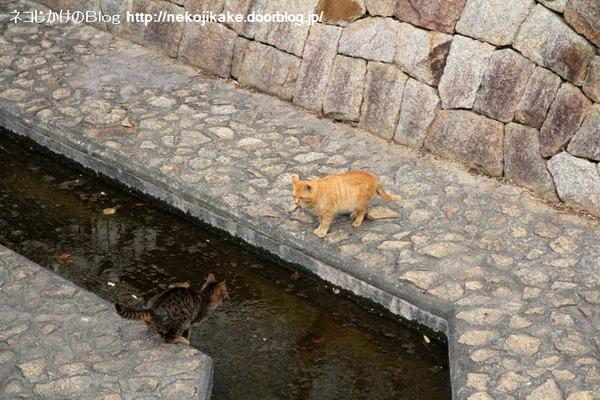 2014021302川を越えるネコ。