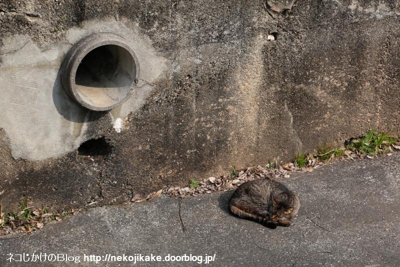 2017033004排水口と猫。