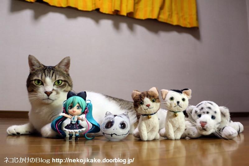2017080806本物の猫も一緒に世界猫の日を祝おう。