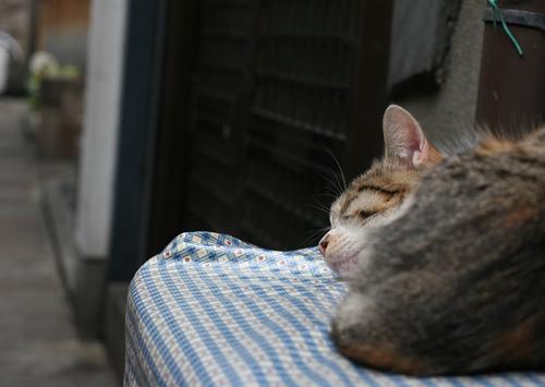 公開グループ展「猫町」DM