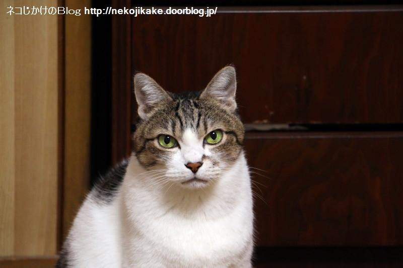 2018093001猫は年齢がわかりにくい。