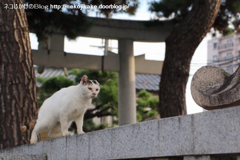 2015082405この世の中に猫の居場所がないわけがない。1